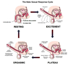 Understand chinese acupuncture for sexual problems apologise, but