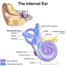 Tinnitus-Ringing in the Ear, Treatment Options From Many